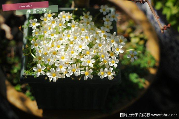 IMG_5348_副本.jpg