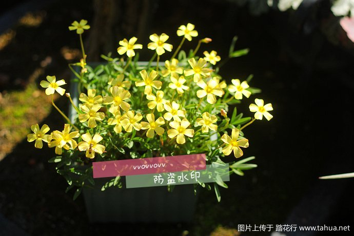 IMG_5415_副本.jpg