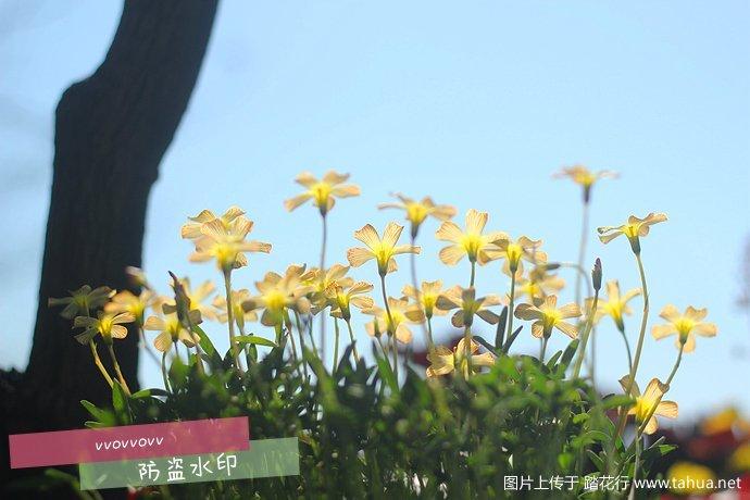 IMG_5427_副本.jpg