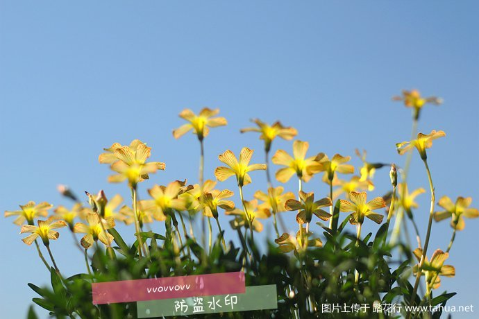 IMG_5434_副本.jpg