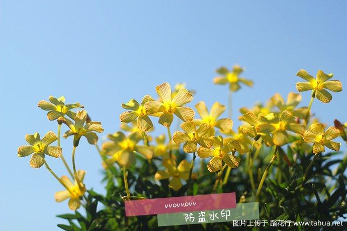 IMG_5455_副本.jpg
