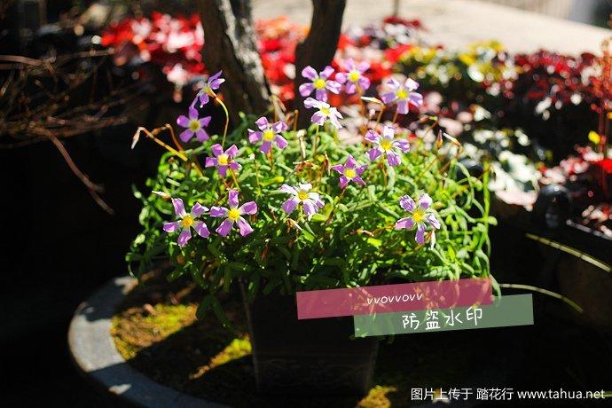 IMG_5484_副本.jpg
