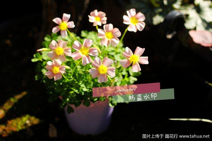 IMG_5520_副本.jpg