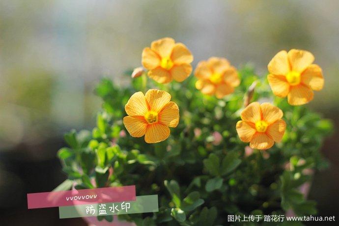 IMG_5570_副本.jpg