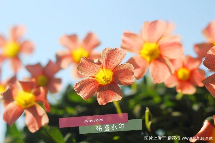 IMG_5601_副本.jpg