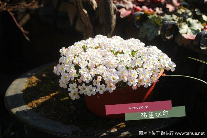 IMG_5619_副本.jpg