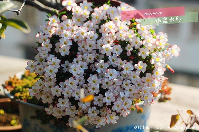 IMG_5631_副本.jpg