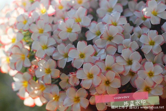 IMG_5646_副本.jpg