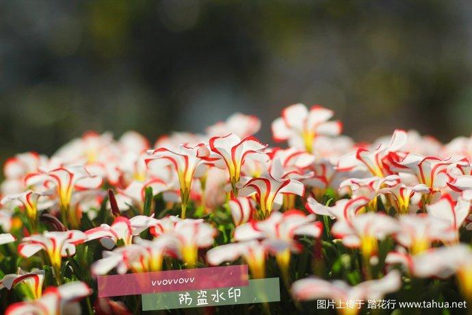 IMG_5648_副本.jpg