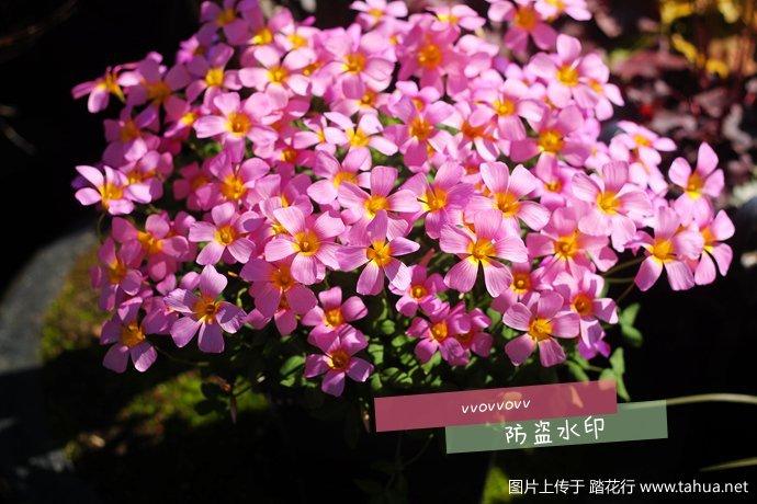 IMG_7428_副本.jpg