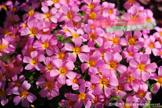IMG_7450_副本.jpg