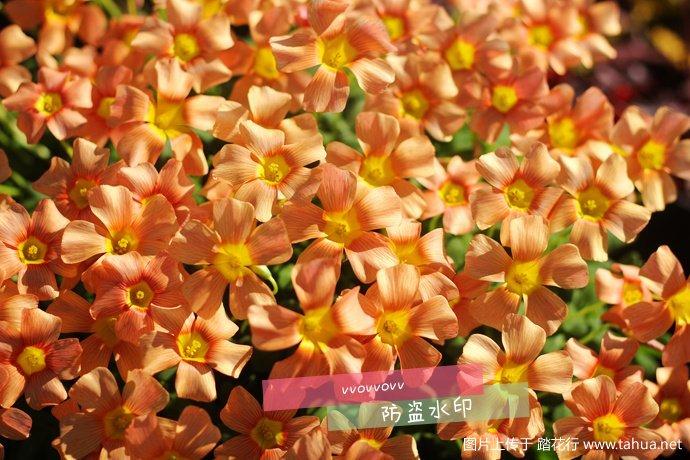 IMG_7465_副本.jpg