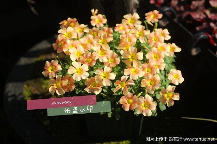 IMG_7536_副本.jpg