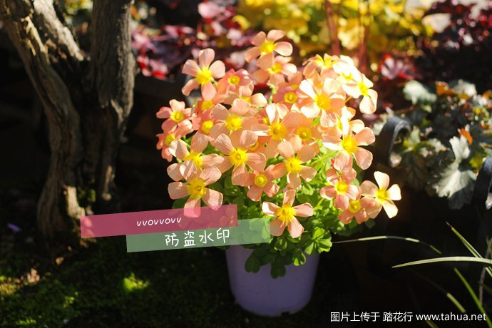 IMG_7564_副本.jpg