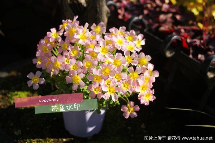 IMG_7596_副本.jpg