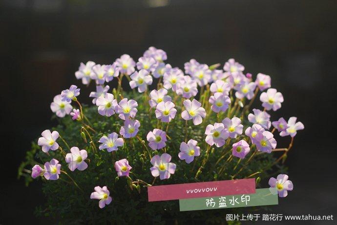 IMG_7688_副本.jpg