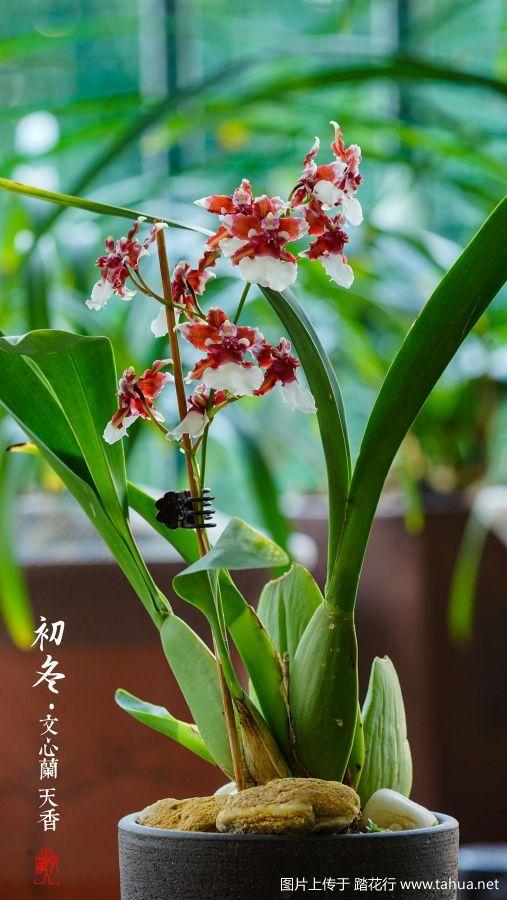 回望2018-----这一年阳台上所有的兰科植物花照