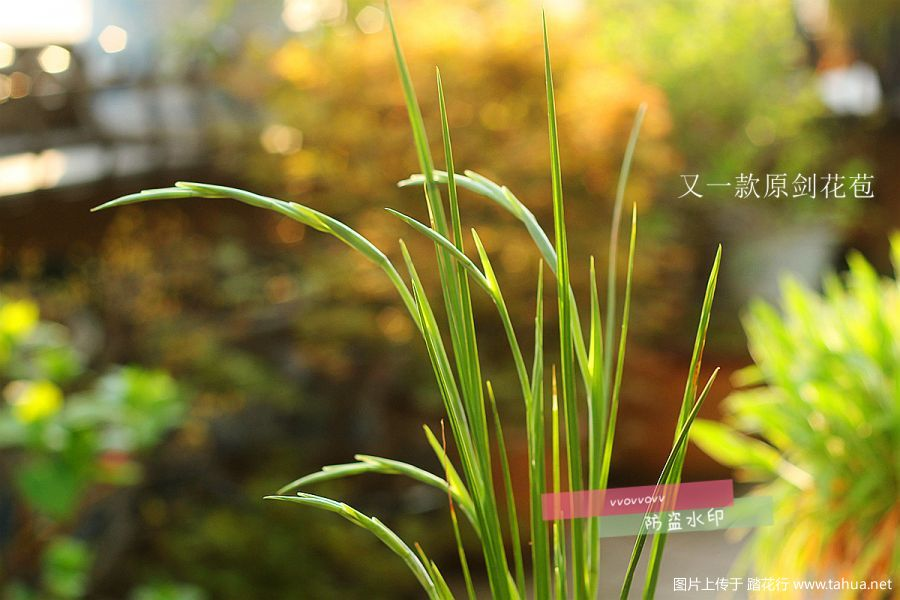 IMG_3353_副本.jpg