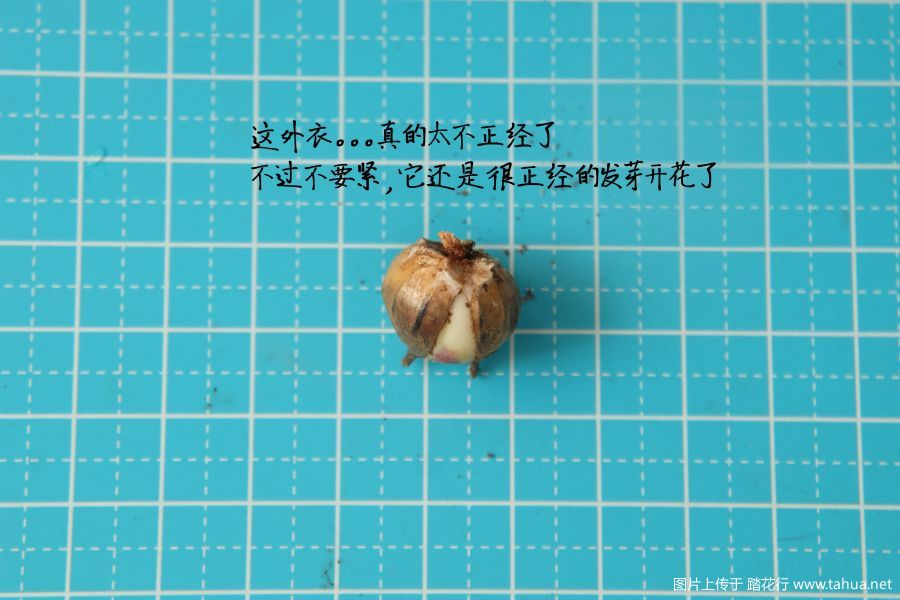 成球球图.jpg