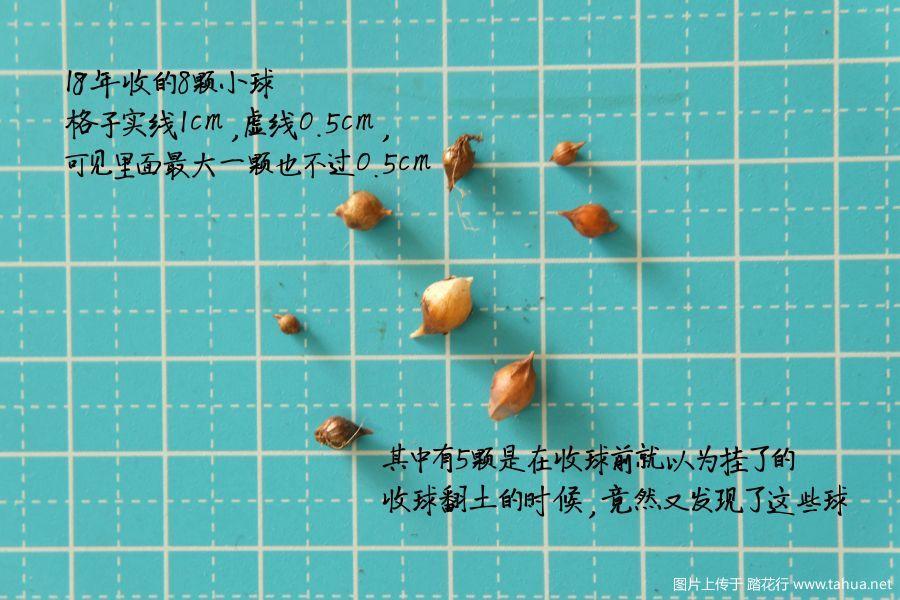 收球图.jpg