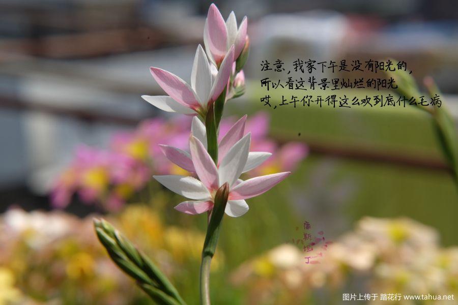 上午开花图.jpg