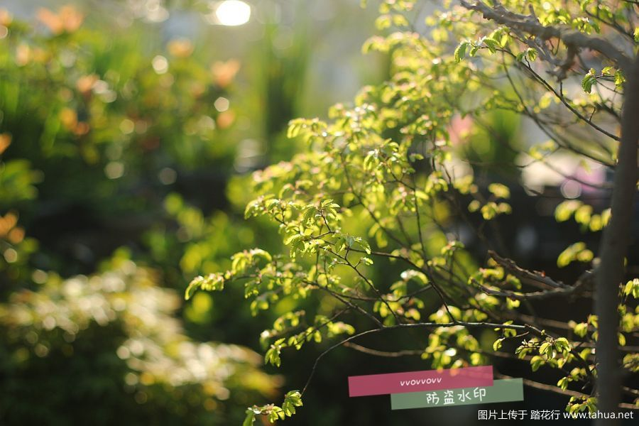 IMG_6542_副本.jpg