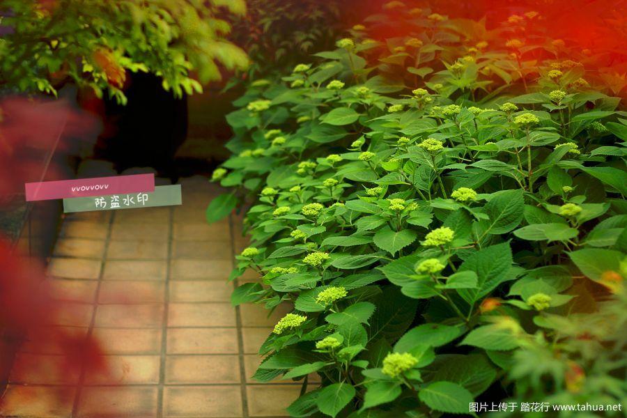 IMG_0983_副本.jpg