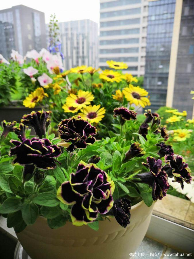 61a1800d303ceae05140bf984bb4f99.jpg