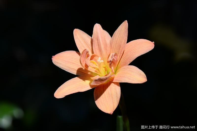 DSC_6963晴天-2.JPG