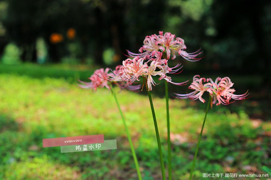IMG_2732_副本.jpg